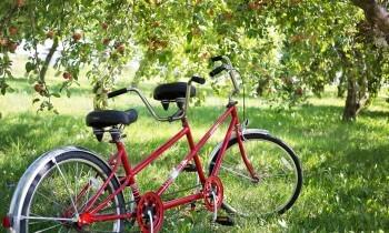 Idealny rower na wycieczki po mieście jak i poza nie